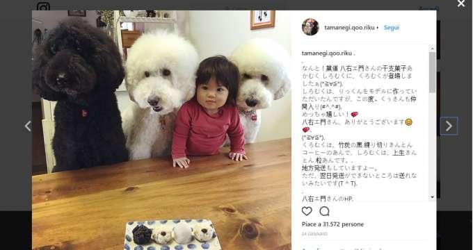 meme e i tre barboncini post instagram @tamanegi