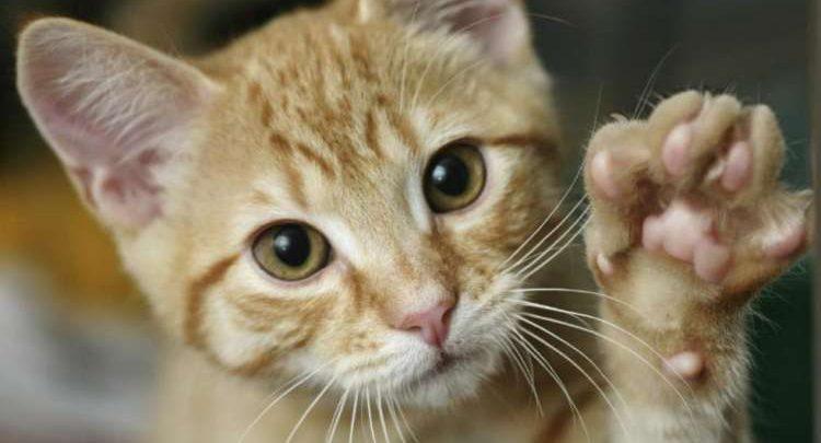 gatti affascinanti